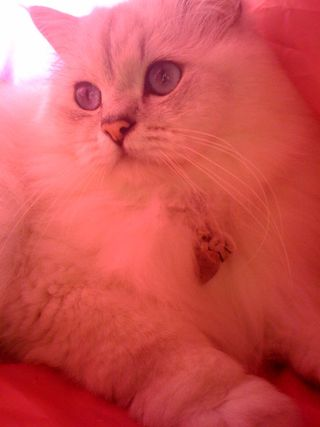 Rex in pink tent