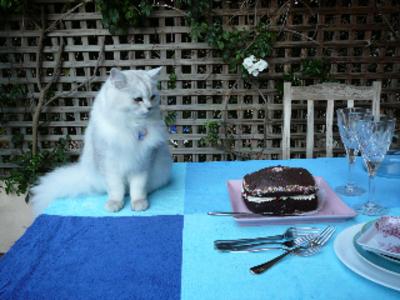 Simba_first_birthday