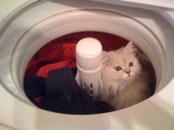 Rocky_in_washing_machine_3