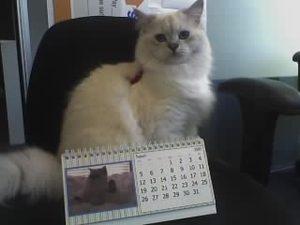 Rex_calendar